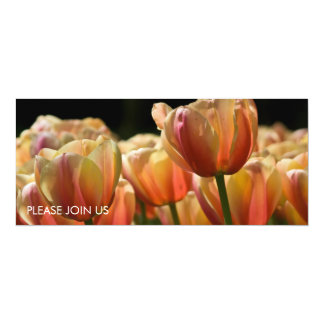 Yellow & Red Variegated Tulips DSC0799 Card