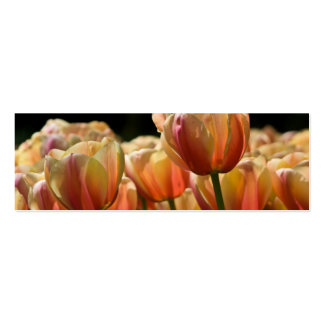 Yellow & Red Variegated Tulips DSC0799 Double-Sided Mini Business Cards (Pack Of 20)