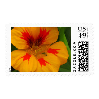 Yellow Red Wildflower Stamp