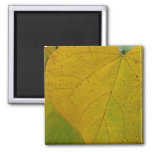 Yellow Redbud Leaves Autumn Nature Photography Magnet