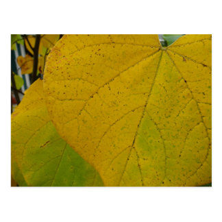 Yellow Redbud Leaves Autumn Nature Photography Postcard