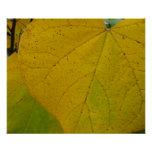 Yellow Redbud Leaves Autumn Nature Photography Poster