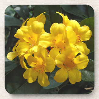 Yellow Rhododendron Drink Coasters
