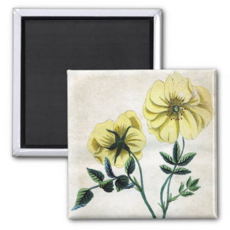 Yellow Rosa Lutescens Magnet