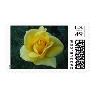 Yellow Rose2 Stamps