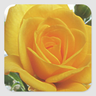 Yellow Rose 1a Square Sticker