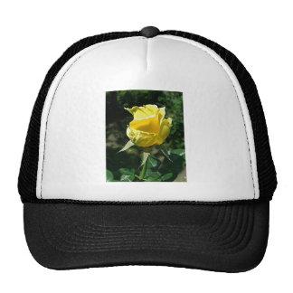 Yellow Rose 2 Trucker Hat