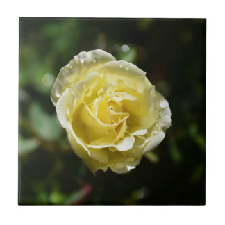 Yellow Rose After the Rain tile