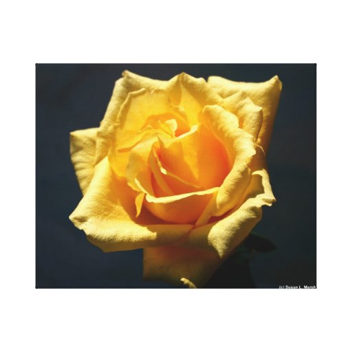 Yellow Rose against dark background design Canvas Print