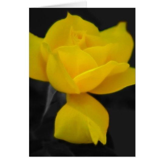 Yellow Rose and meaning Card