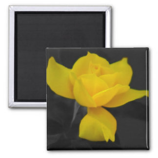 Yellow Rose and meaning Magnet