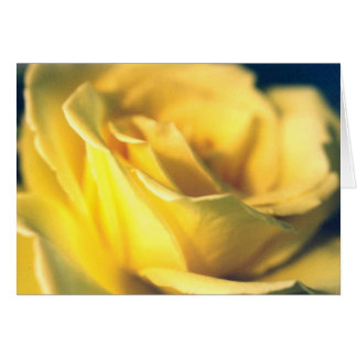 Yellow Rose blank card