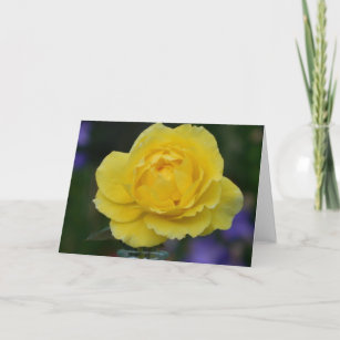 Blank cards zazzle yellow rose blank greeting card m4hsunfo