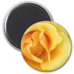 Yellow Rose Blossom Button Refrigerator Magnets