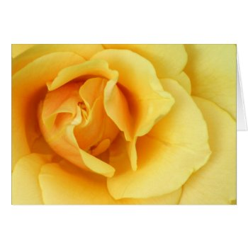 Yellow Rose Blossom Greeting Card by PerennialGardens at Zazzle