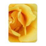 Yellow Rose Blossom Premium Magnet Rectangular Magnet