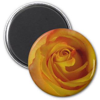 yellow rose bud 2 inch round magnet