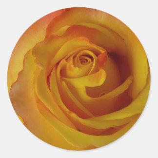 yellow rose bud classic round sticker