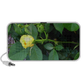 Yellow Rose Bud Doodle Speaker