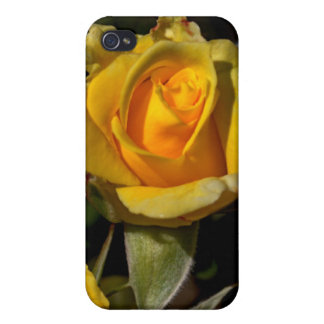 Yellow Rose Bud iPhone 4 Case