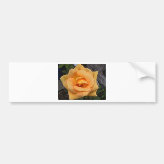 YELLOW ROSE BUMPER STICKERS