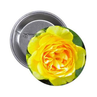 Yellow Rose Button