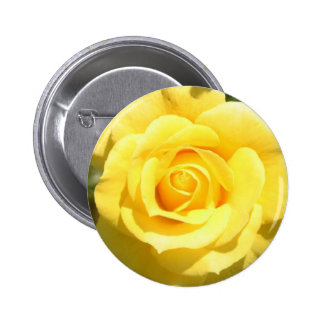 Yellow Rose Buttons