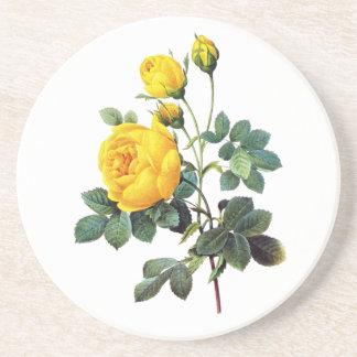Yellow Rose by Pierre Joseph Redoute Drink Coaster