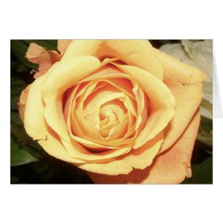 Yellow Rose | Card