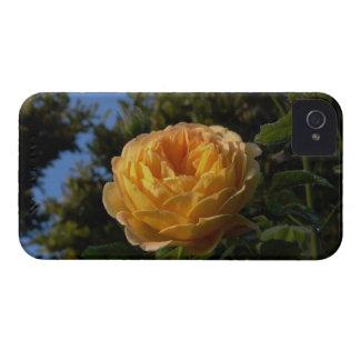 yellow rose iPhone 4 case