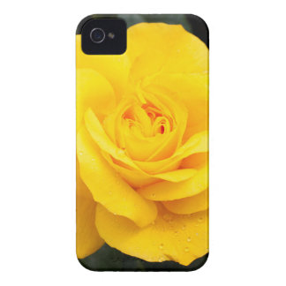 Yellow Rose Case-Mate iPhone 4 Case