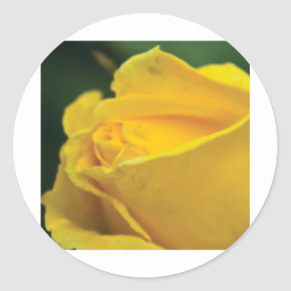 yellow rose classic round sticker