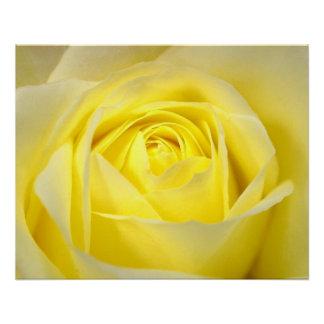 Yellow Rose Closeup Poster