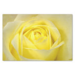 Yellow Rose Closeup Tissue Paper at Zazzle