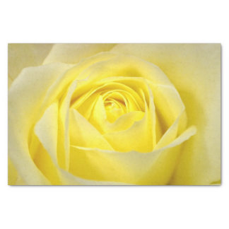 Yellow Rose Closeup Tissue Paper