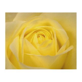 Yellow Rose Closeup Wood Print
