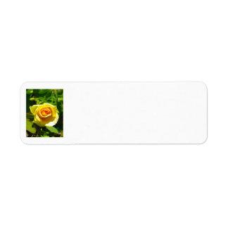 Yellow Rose Custom Return Address Labels