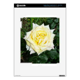 Yellow Rose Decal For iPad 3
