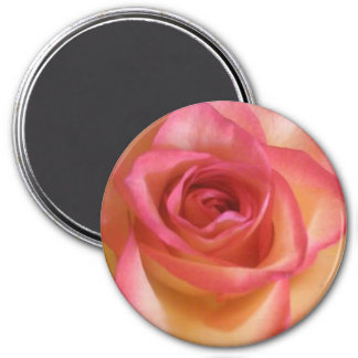 Yellow rose edged in pink round magnet