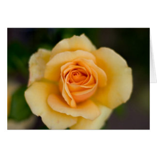 Yellow Rose Flower Cards