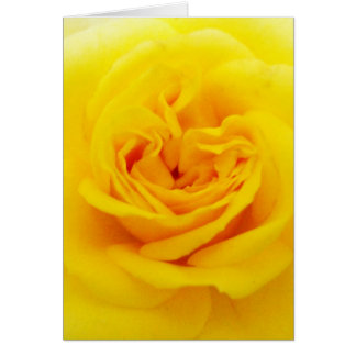 Yellow Rose Flower Close-up Card