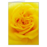 Yellow Rose Flower Close-up Greeting Card