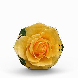 Yellow rose flower in bloom in garden 2 acrylic award