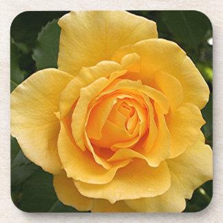 Yellow rose flower in bloom in garden 2 drink coasters
