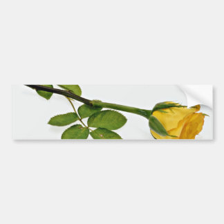 Yellow rose flowers bumper stickers