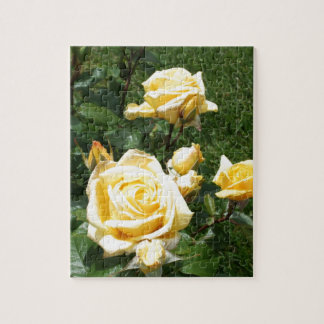 Yellow Rose Flowers Jigsaw Puzzles