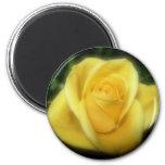 Yellow Rose Fridge Magnet
