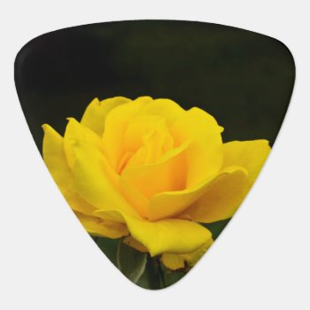 Yellow Rose Guitar Pick by HighSkyPhotoWorks at Zazzle