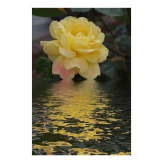 Yellow Rose hint of pink fractals flood Poster
