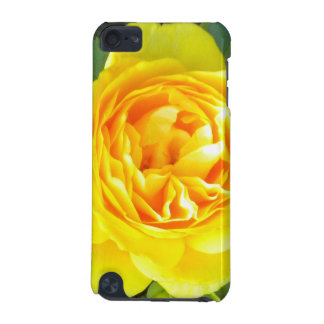 Yellow Rose iPod touch case